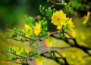 Top những loại hoa nên và không nên đặt trên bàn thờ trong ngày tết