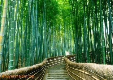 Đâu là những khu rừng chất nhất thế giới?