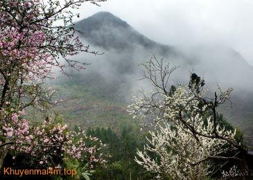 Có một mùa hoa ban mộng mở ở Điện Biên