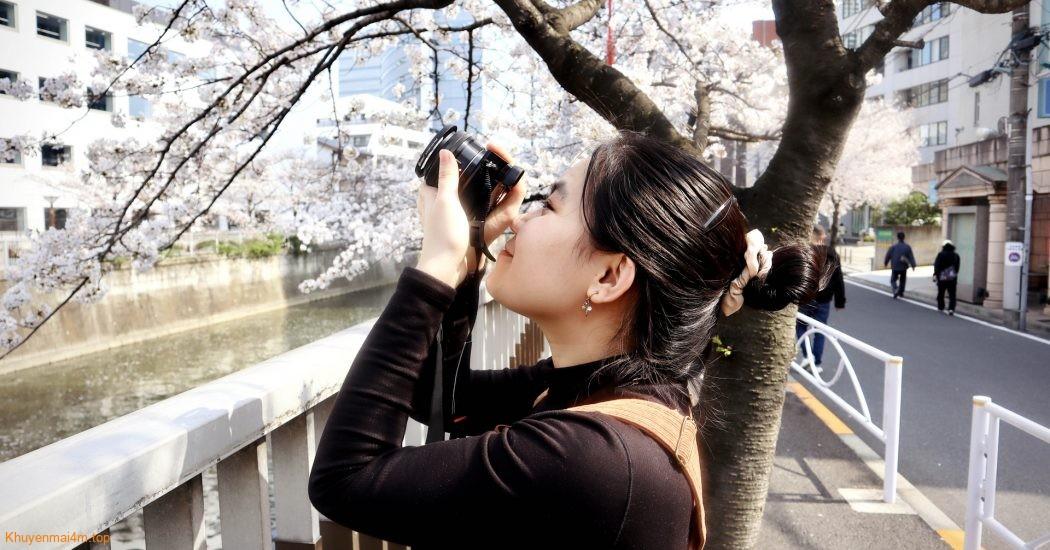 Hoa anh đào Nhật Bản nở sớm nhất trong vòng 1.200 năm qua