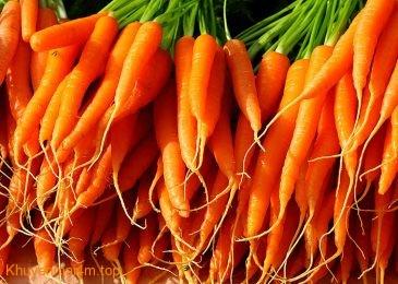 Rau quả màu cam rất tốt cho phổi